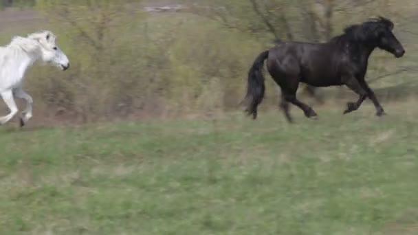 koně tryskem
