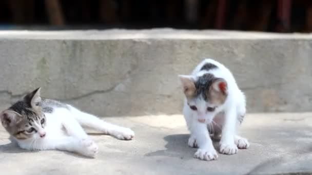 Two striped cats playing