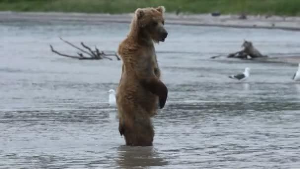 Happy bear cub