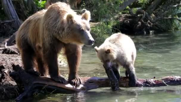 She-bear and bear cubs.