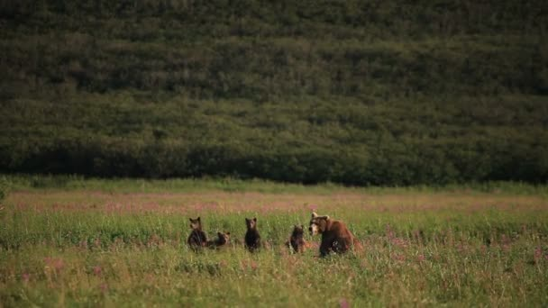 クマの家族