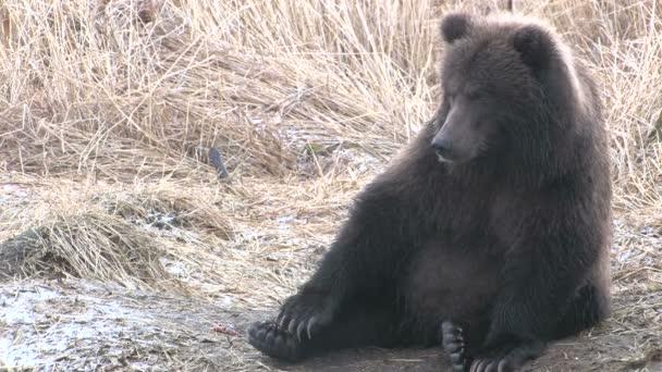 šťastný medvídě