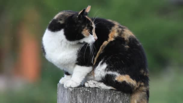 cat sitting on wooden post