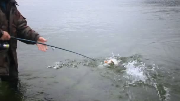 Halat egy halász