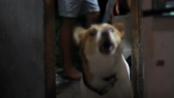 bellender Hund