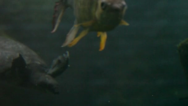 Turtles, fish, underwater