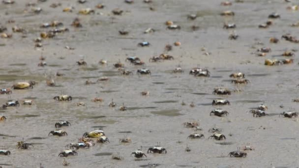 Krabi na pláži