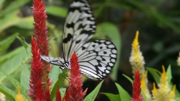 motýl zblízka