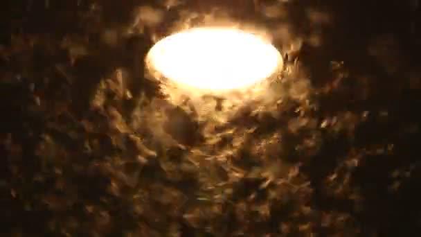 Lepkék, lámpa