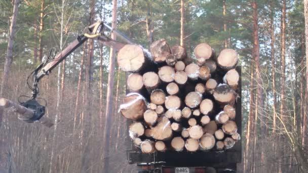 kombajn pracuje v lese