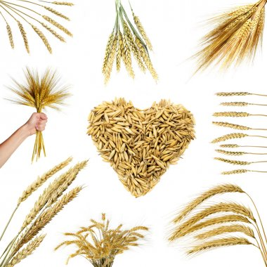 Collections of wheat ears