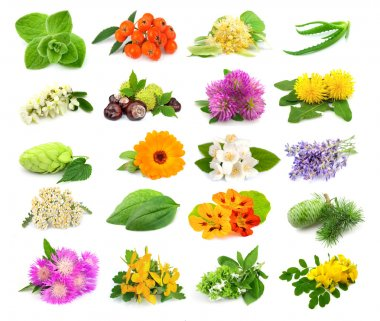 Collection of herbs and flowers