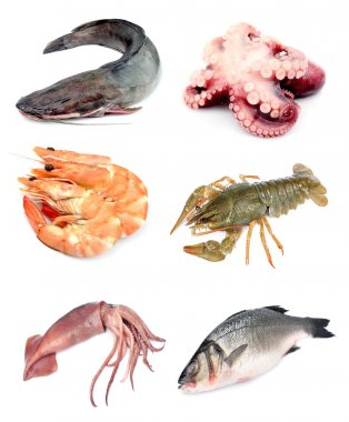 Collection of seafood