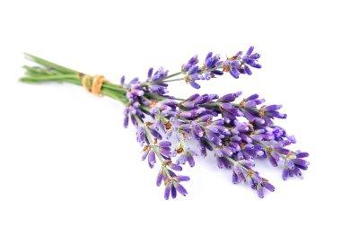 Fragrant lavenders