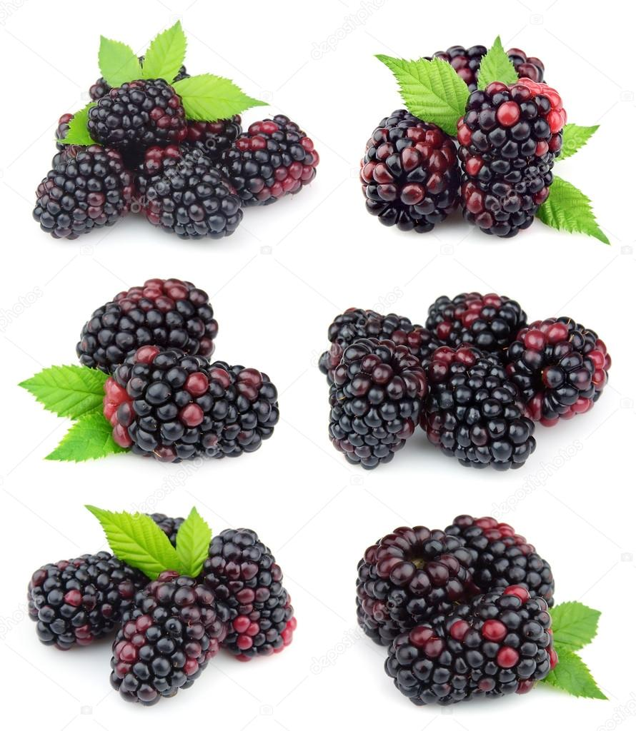 Collage of sweet blackberry fruit