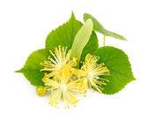 Fotografie Fresh lime flowers