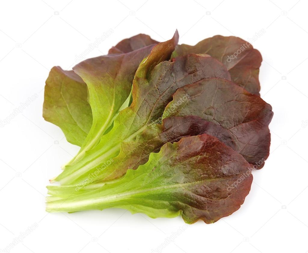 Red gourmet lettuce