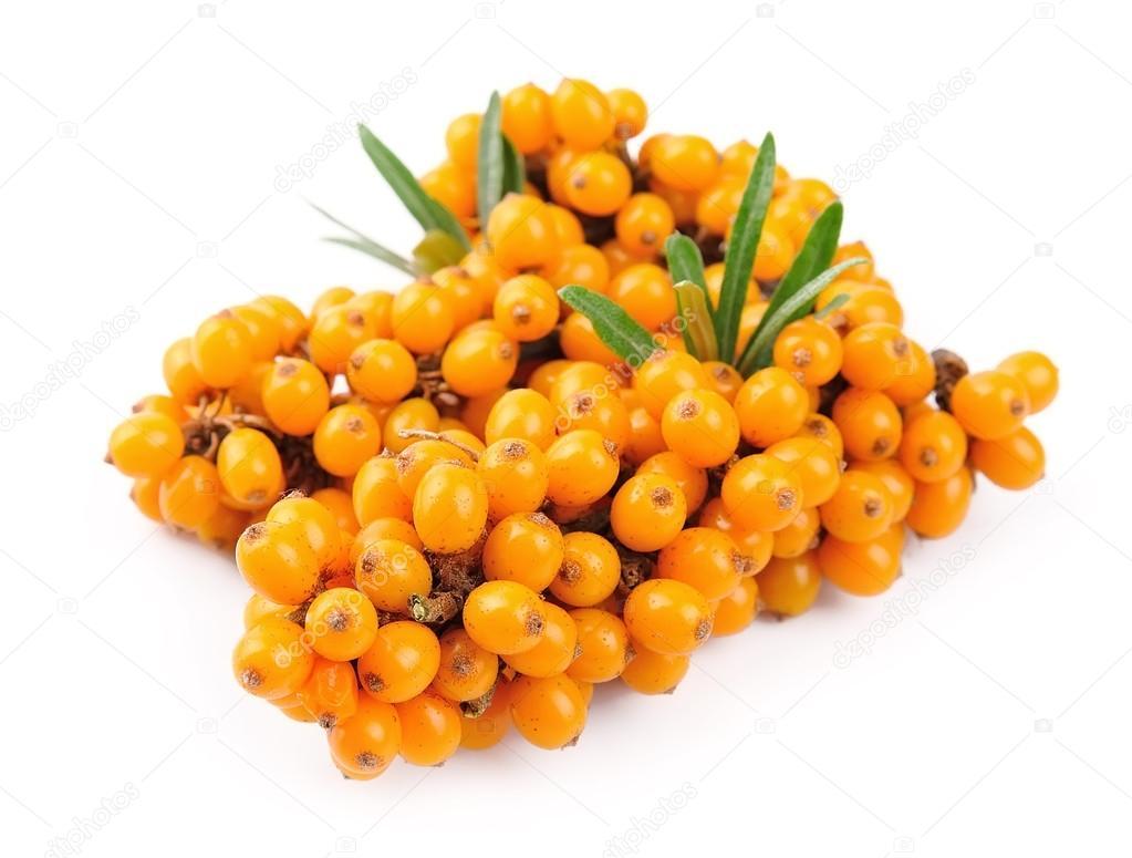Sea buckthorn berries branch