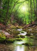 řeka hluboko v horském lese