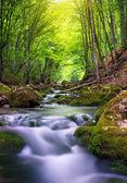řeka v horském lese