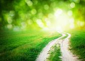 cesta slunce