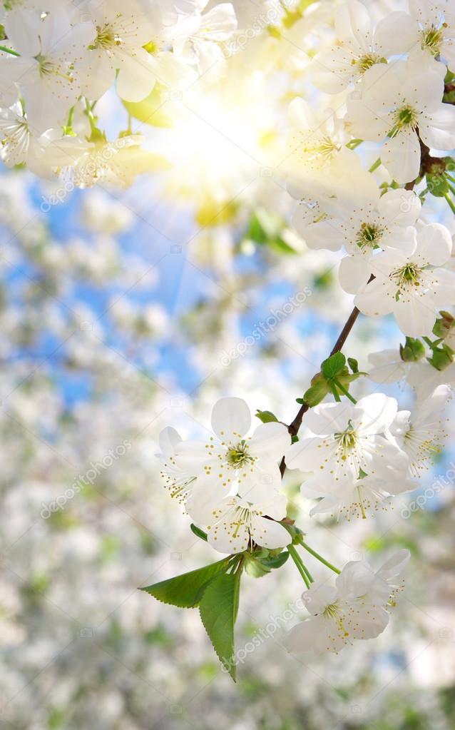 Branch of big white tree