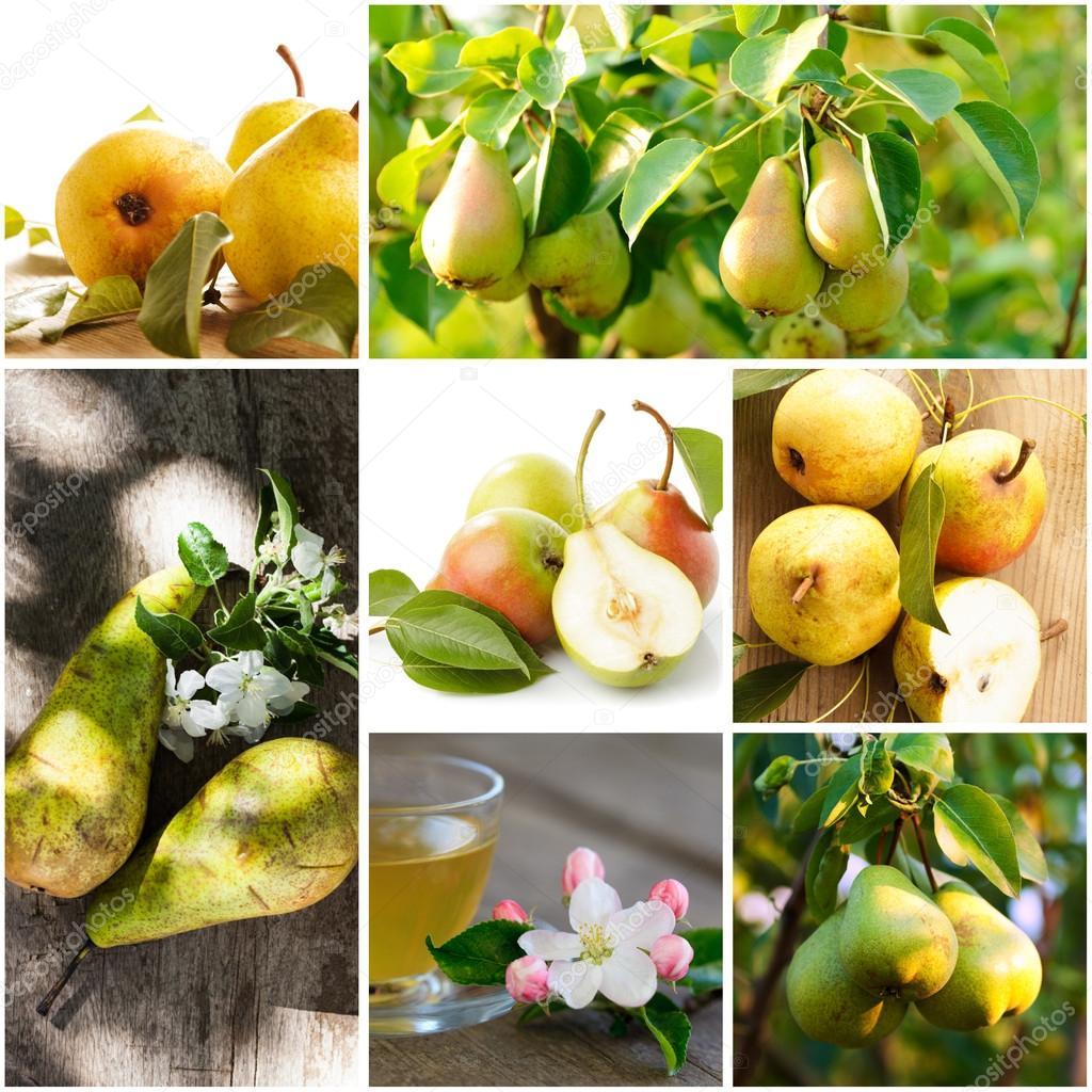 Fresh various pears