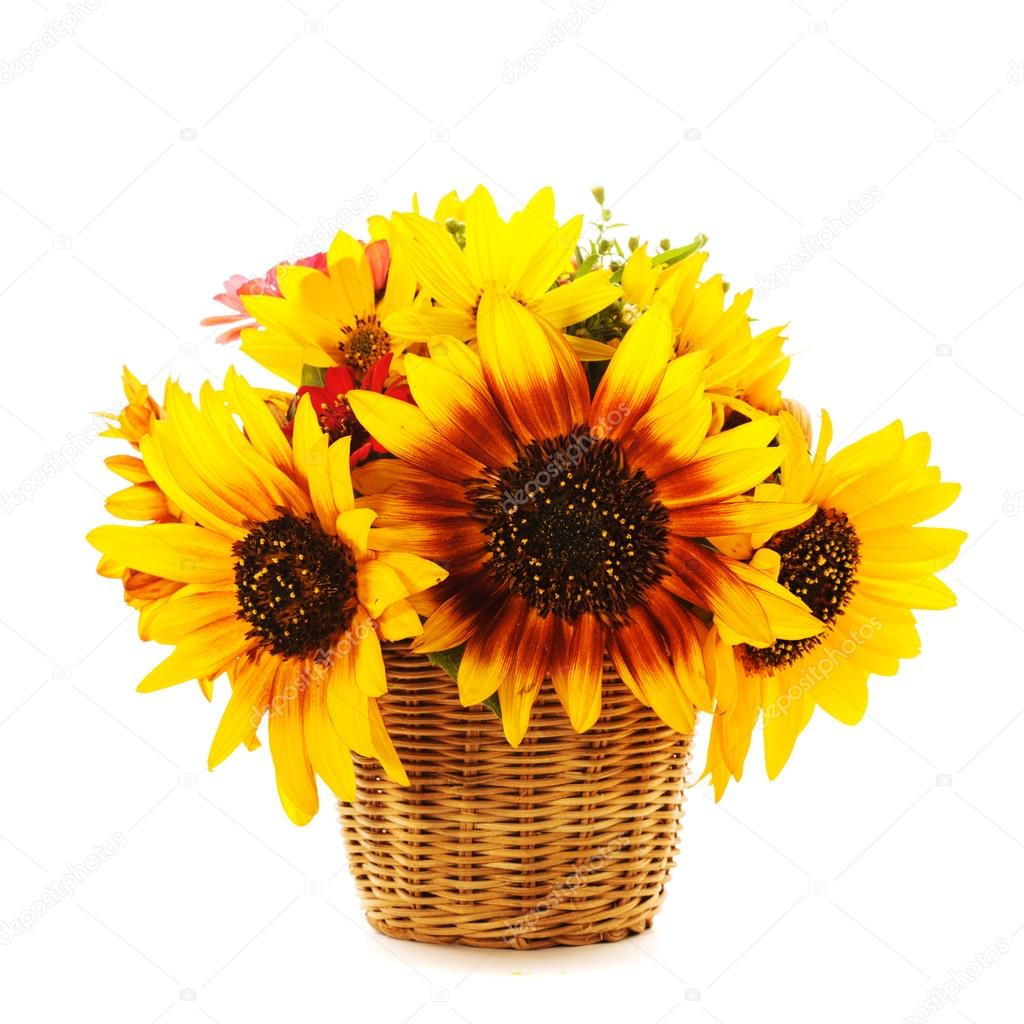 sunflowers in basket isolated