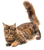 Fotografie mladá kočka