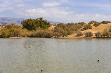 Oasis in Maspalomas Dunas