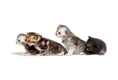 Four little kitten