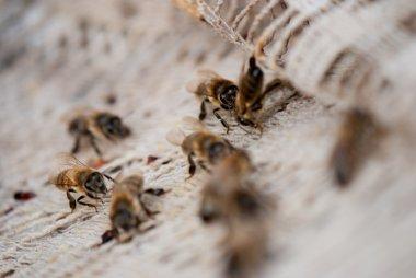 Bees crawling