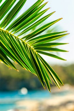 Palm tree leaf background