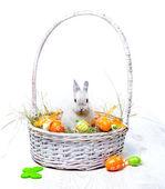 Fotografie Kaninchen in einem Korb