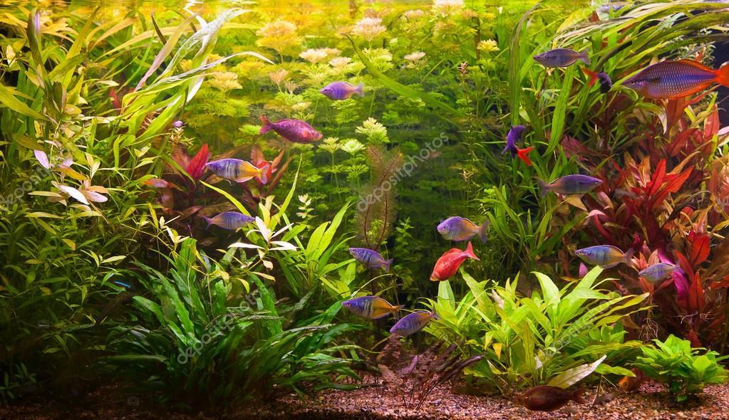 ttropical s wasser aquarium mit fischen stockfoto 13866565. Black Bedroom Furniture Sets. Home Design Ideas