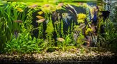 Fotografie ttropical sladkovodní akvárium s rybami