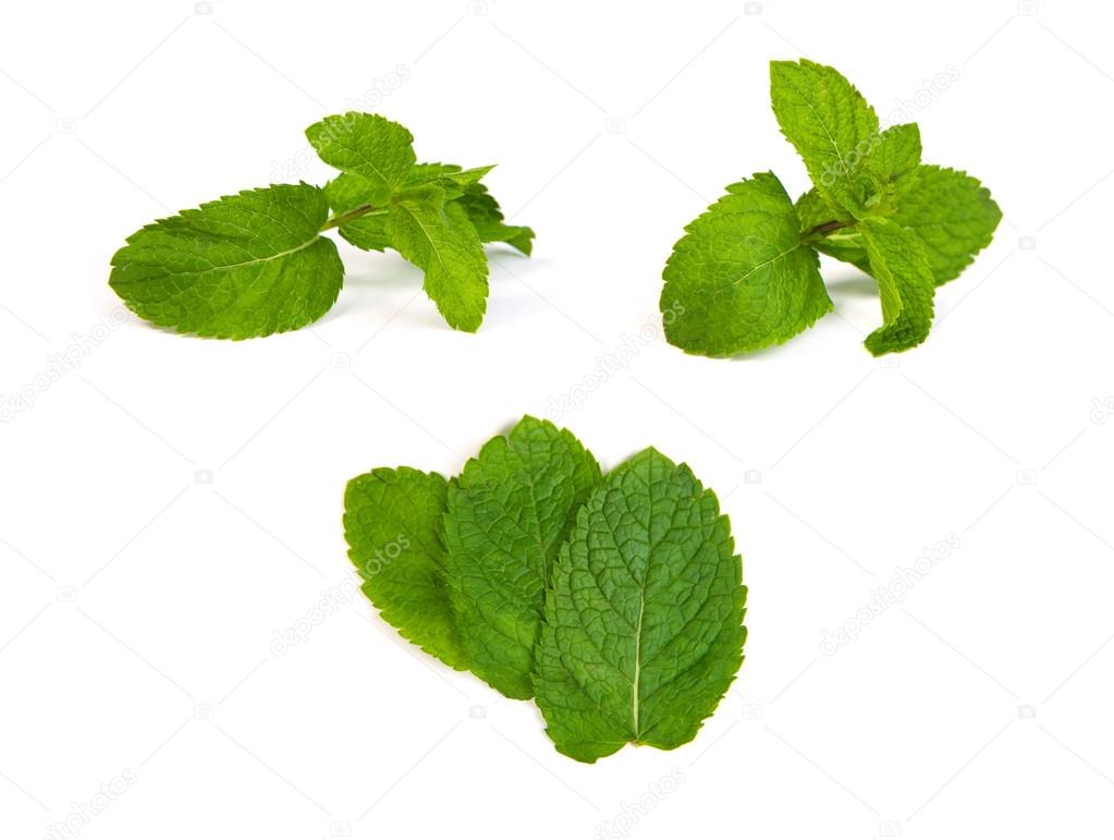 set of mint leaves on white background
