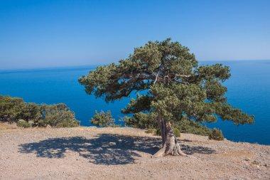 Summer view seacoast. Sudak beach. Black Sea, Ukraine