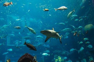 Aquarium tropical fish on a coral reef