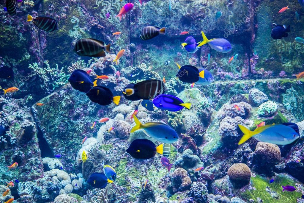 Aquarium tropische vissen op een koraal rif  u2014 Stockfoto  u00a9 bloodua #44700517