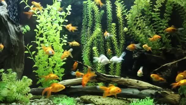 zöld gyönyörű ültetett trópusi Édesvízi akváriumi halak