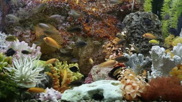 Tropical fish on a coral reef in aquarium