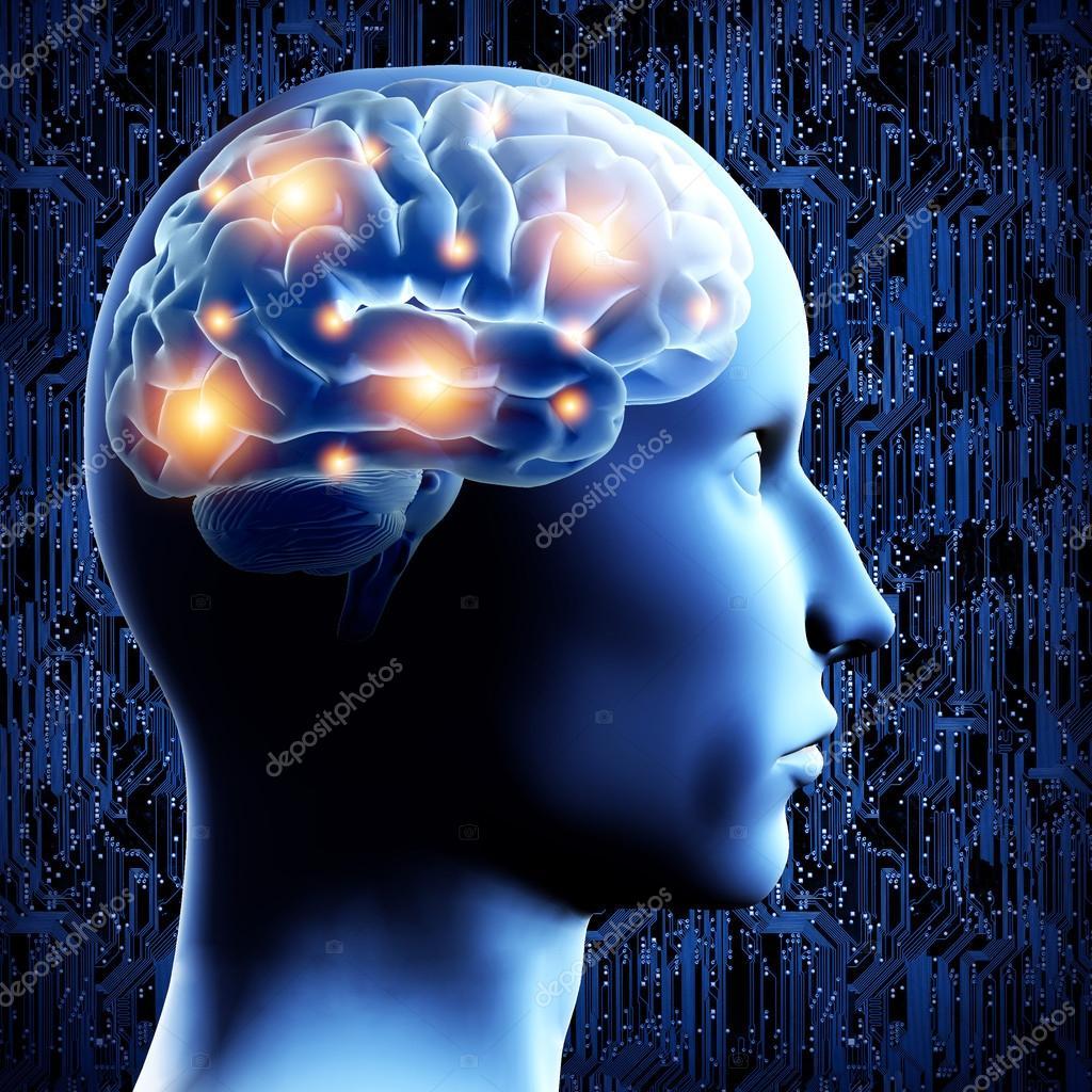 Gehirn - 3d illustration — Stockfoto © Leonardi #21456355