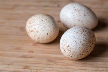 Fresh turkey eggs