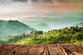 Tea plantations in India (tilt shift lens)