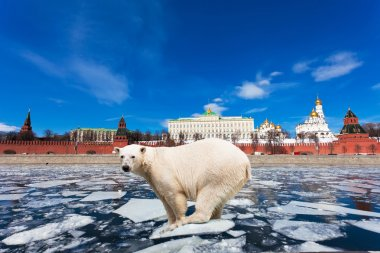 Spring in Moscow. The polar bear on an ice floe floats by the Kremlin