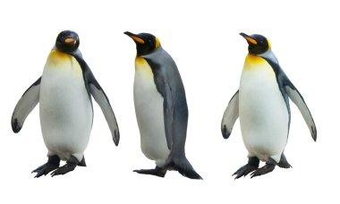 Three imperial penguins