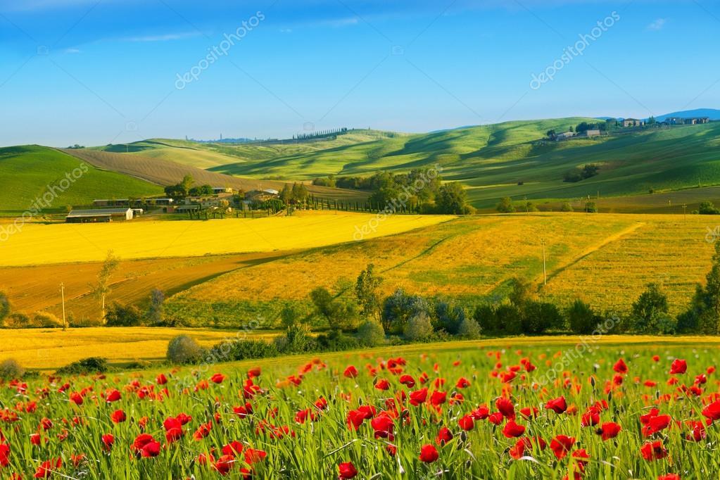 Fioritura di papaveri foto stock lenorlux 49639935 for Foto paesaggi naturali gratis