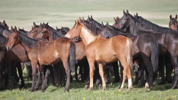a nyári legelőn csorda ló