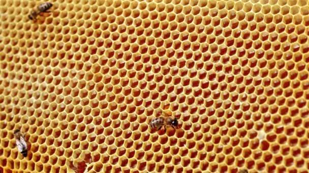 Rám s včely a včelí voštiny